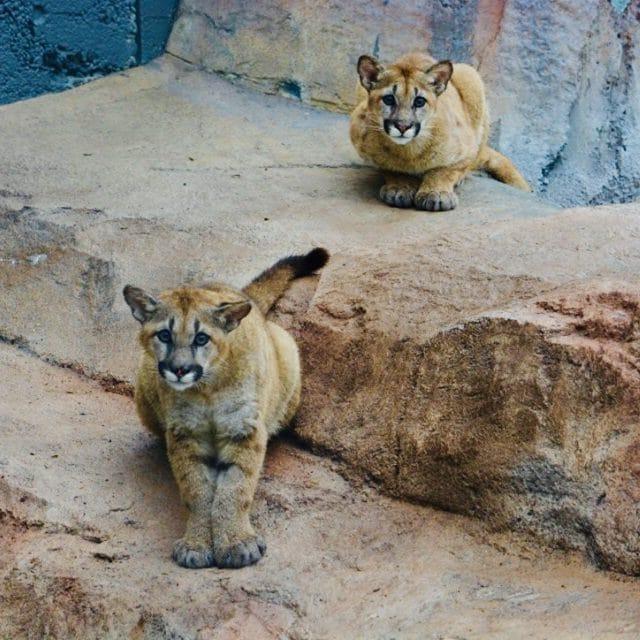 Wild Cat Station – EcoTarium