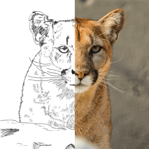 Download: Mountain Lion Facts & Crafts Activity Sheet